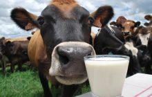 Reunião vai discutir criação de bovinos com foco na qualidade do leite e campanha de vacinação