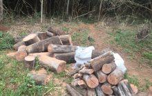 Homem  é preso por corte ilegal de árvores no interior de Santa Helena