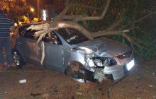 Carro invade calçada e derruba árvore em São Miguel