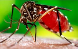Santa Helena está em alerta vermelho contra a dengue e tem 78 casos confirmados