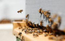 #Inusitado: Vereador quer espalhar abelhas sem ferrão em parques e praças de Cascavel