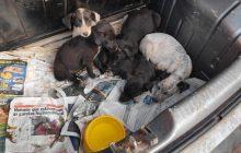 Presos por horas em porta-malas, cachorrinhos são resgatados após PM arrombar vidro de carro