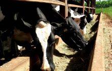 Município convoca produtores de leite para programa de incentivo ao melhoramento genético