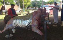 Boi no Rolete e Leitão à Marechal no Cicloturismo acontece neste domingo em Marechal Rondon