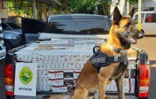 Homem é preso com caminhonete roubada e contrabando em Santa Helena