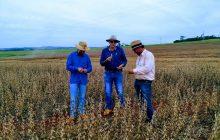 Safra verão da soja em Santa Helena apresenta resultados positivos de produção