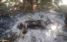 Criança raptada é morta como 'oferenda satânica' no Paraguai