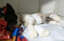 Morre cachorro que foi amarrado e arrastado por caminhonete
