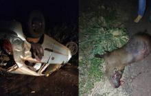 Celta capota após colidir em capivara na PR 317 em Santa Helena