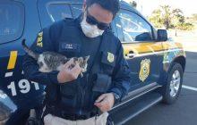 Policiais Rodoviários resgatam filhote de gato que foi arremessado de veículo