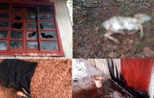 Policia Militar de Missal prende homem em flagrante e apaga fogo em residência