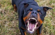 Polícia Civil abre inquérito para investigar morte de criança atacada por cão em Itaipulândia
