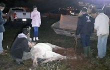 Égua resgatada com sinais de maus tratos morre antes de receber atendimento