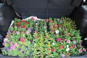 Santa Helena: Estudantes recebem mudas de árvores e flores para plantio