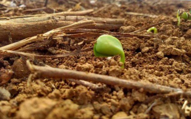 Mais forte, La Niña deve durar até abril de 2021 e afetar milho 2ª safra