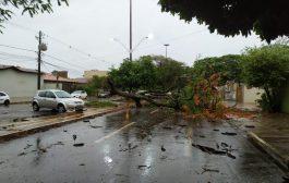 Segunda maior cidade de MS declara situação de emergência após vendaval deixar rastro de destruição