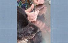 Cadela fica ferida após rojão explodir na boca
