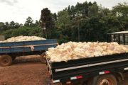 Outra vez: Falta de luz provoca morte de toneladas de frangos