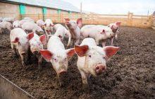 Itaipulândia disponibiliza auxílio de até R$89 mil para construção de biodigestor
