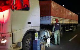 BPFRON apreende maconha em caminhão na cidade de Céu Azul/PR